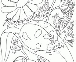 Small Picture Bug Coloring Pages Yeskebumennewsco Cute Insect Coloring Pages In