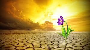 Resultado de imagem para flores do deserto