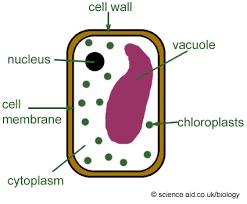 animal cell easy diagram photo album   diagramscollection animal cell easy diagram pictures diagrams
