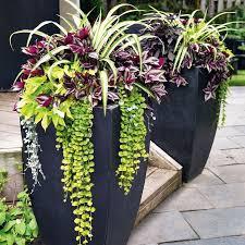 Image result for garden pots