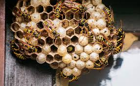 Bee? <b>Wasp</b>? Hornet? A Guide to Stinging Insects