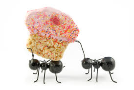 Image result for Picnic with ants picture