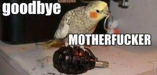 Goodbye motherfucker - Memes Comix Funny Pix via Relatably.com