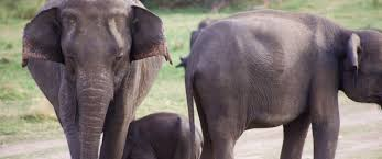responsible tourism interviews essays and tips elephant safari sri lanka