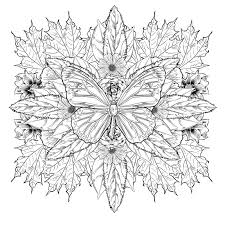 <b>Beautiful butterfly</b> with intricate designs Graphic Vector - Stock by Pixlr