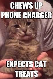 Sassy Kitty memes   quickmeme via Relatably.com