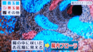 「腸内フローラ」の画像検索結果