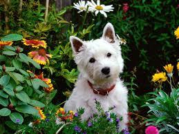 Ο σκύλος στον κήπο(;)....
