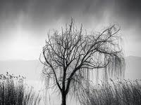 Пейзаж, растения.: лучшие изображения (51) | Black, white, Art ...