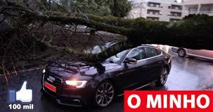 Braga vai remover cerca de 130 árvores na cidade e prevê plantar 400