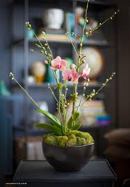 day orchid decor: orchid plant home decoration orchid orchid plant home decoration