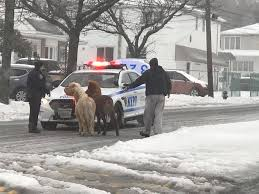 <b>Staten Island</b> Ponies Detained By NYPD For Prancing Around In ...