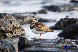 새가 서서있는 모습에 대한 이미지 검색결과