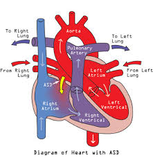 heart and blood flow diagram   aof comgallery of heart and blood flow diagram