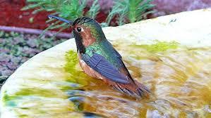 Attract <b>Birds</b> With Birdbaths