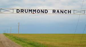 Image result for gentner drummond