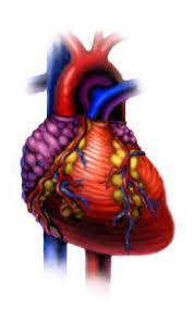 Habits of the <b>Heart</b>: The <b>Heart</b>