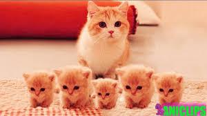 <b>Sweet Cat</b> Family - YouTube