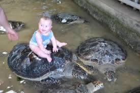 Image result for turtle island bali