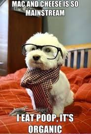 Grooming on Pinterest | Funny, Dog Grooming and Dog Haircuts via Relatably.com