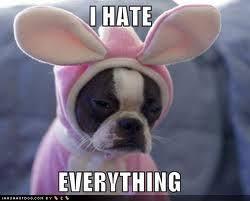 sad #dog #meme | Funny Animal Pictures | Pinterest | Grumpy Dog ... via Relatably.com