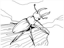 Small Picture Adult insect coloring pages Spring Insects Coloring Pages Best