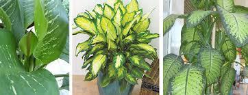 enter image description here best office plants no sunlight