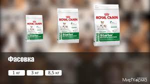 Обзор <b>корма Royal Canin Mini</b> Starter - YouTube