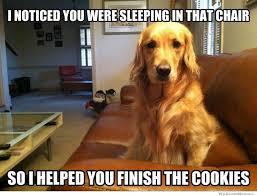helpful-dog-meme.jpg via Relatably.com
