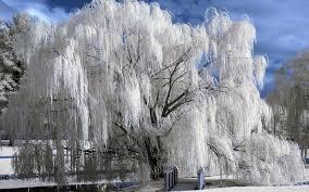 نتیجه تصویری برای تصاویری ازفصل زمستان