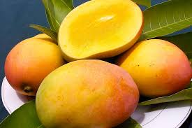 Image result for mango fruit mauritius