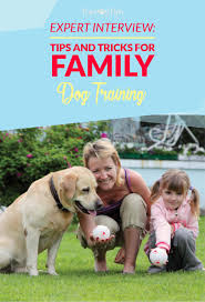 expert interview important tips and tricks for family dog training tricks for family dog training