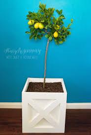 lemon tree x: x planter with lemon tree x planter with lemon tree x planter with lemon tree