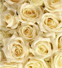 <b>Букет</b>-<b>соло</b> Белые розы (15,25,35,51,75,101 или 151), Шаховская