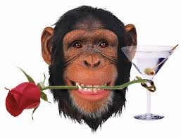 Image result for chimps wearing jewelry pictures