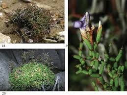 Irreplaceability characterised by micro-speciation of narrow ...