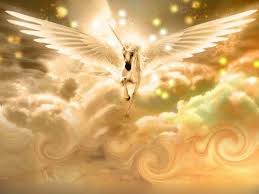 Image result for image of pegacorn