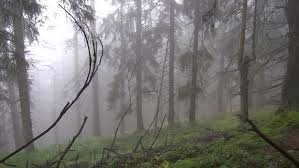 Image result for cedar forest rain