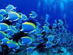 tangfish