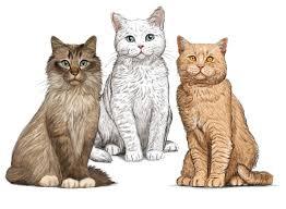 <b>Cat</b> Food - <b>Gosbi</b>