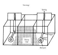 House Sparrow damage control  Passer domesticus     Trio trap for house sparrows