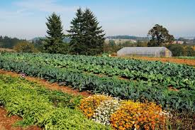 Image result for farming innovations