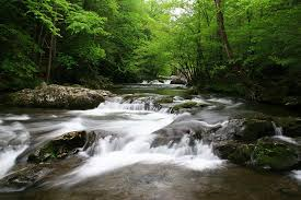 project news   southern forests for the futureinvestments in forest conservation can save money on providing clean water