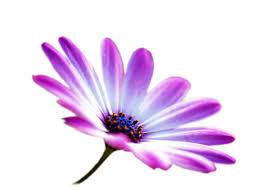 """Résultat de recherche d'images pour """"guirlande fleurs dessin"""""""