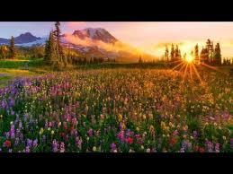 <b>Richard Clayderman</b> - Dreams - YouTube