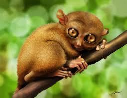 tarsier க்கான பட முடிவு