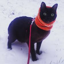 Image result for winter cats