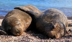 Galapagos Islands Wildlife Holidays, Wildlife Holidays In Ecuador ...