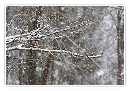 Bildergebnis für es schneit