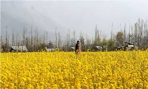 essay on my favourite season spring in pakistan face   essay for you    essay on my favourite season spring in pakistan face   image